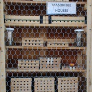 Washington County Mason Bee Display