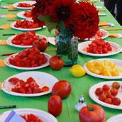 Tomato Taskint