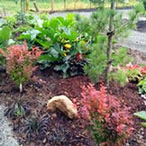 Edibles and Ornamentals at the Jenkins Estate Learning Garden