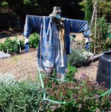 Learning Garden Scarecrow
